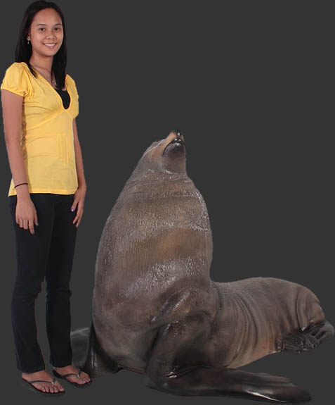 Male Fur Seal / Fiberglass