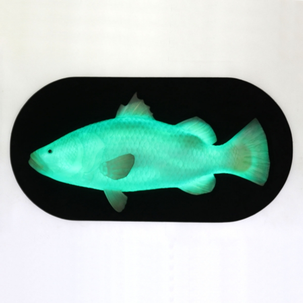 Hanging Fish with LED