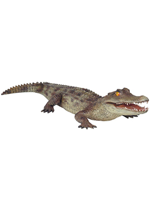Caiman Alligator 6.5 Ft L