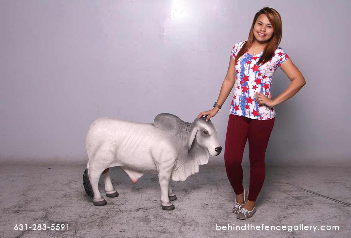 Brahman Bull (Grey) Small