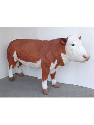 Hereford Bull (Brown-White Angus Bull)