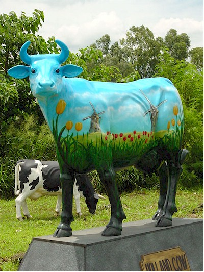 """ Holland "" Cow"