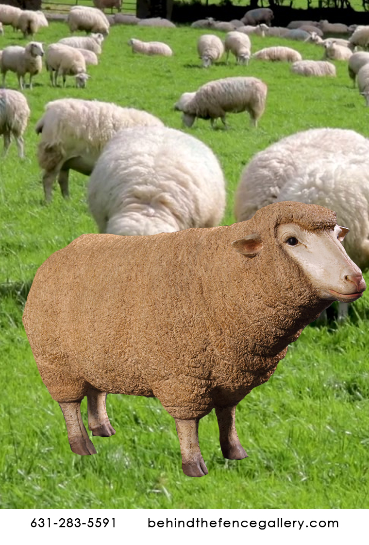 Merino Ewe Head-up