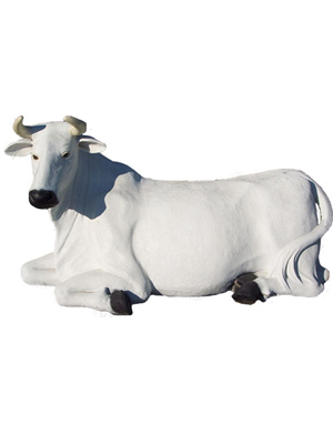 Cow Laying Down - White (with or without Horns)