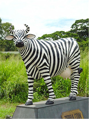 Zebra Cow (with or without Horns)